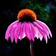 pink_echinacea-789x1024.jpg