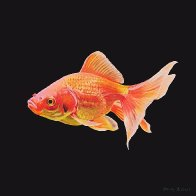 goldfish2 for FBIG.jpg