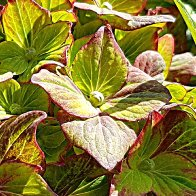 Big Green photo for painting2adjflipcrop23.jpg