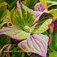 L'Hortensia vert (Maggie's commission).jpg