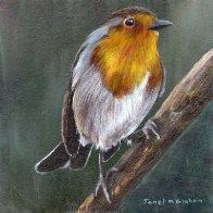 1037. Robin No 12 Original Bird Acrylic Painting by Janet M Graham.jpg