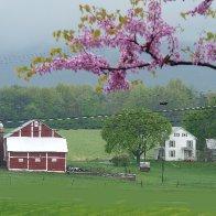 Barn in Rain-redbud-2 copy.jpeg