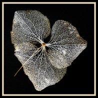 Dry leaf veins1.jpg