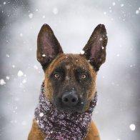 Inuk im Schnee II.jpg