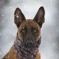 Inuk im Schnee Bild II Bild V .jpg