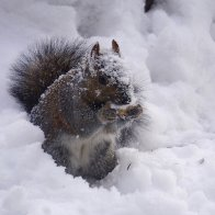 SnowySquirrel.jpg