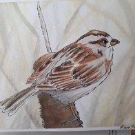 sparrow #2.jpg