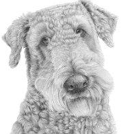 airedale-terrier.jpg