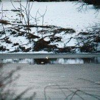 Baldie on icy pond.jpg