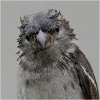 Sparrows180.jpg