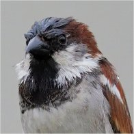 Sparrows181.jpg