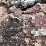 lichen & weathering.JPG