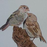 sparrows 2.jpg