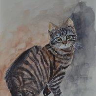 Young Tabby Cat.JPG