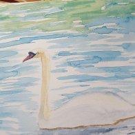 Swan Sketchbook.jpg