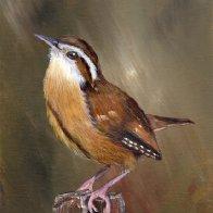 1847. Wren No 3 Original Acrylic Bird Painting by Janet M Graham.jpg