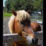 hlnk_Pony.jpg