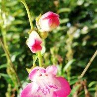 Ref Garden 005.jpg