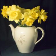 Daffodil 2.png